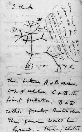 "Darwin manuscript showing ""I think"" and a branching tree"